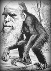 Cartoon of Charles Darwin